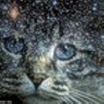 Персанальный сайт котов воителей